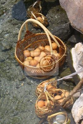 Eier im Korb. In heißen Quellen gekocht.