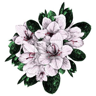 Ein blumenstrauß azalee blüht skizzenvektorgrafik-farbbild ...