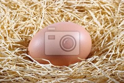 Ein Ei in dem Nest wartet ausgebrütet werden