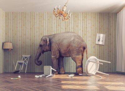 Fototapete Ein Elefant in einem Raum