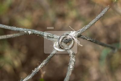 Ein makro von draht fototapete • fototapeten Widerhaken, Metall ...