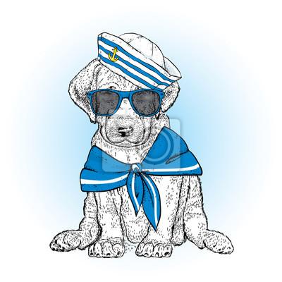9fa32b48a3bda Fototapete Ein schöner Hund in der Seemannkleidung. Vektor-Illustration.  Tier in Kleidung und