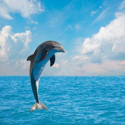 Fototapete ein Springen Delfine