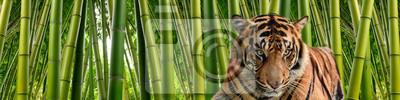Fototapete Ein Tiger in Tall Stiele von dichten grünen Bambus in einem Dschungel-Einstellung.
