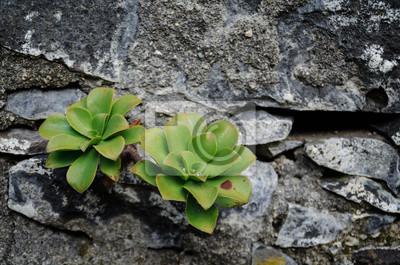 Eine Blume sprießt aus einer Steinwand 1