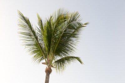 Fototapete Eine Kokosnuss-Palme und blauer Himmel