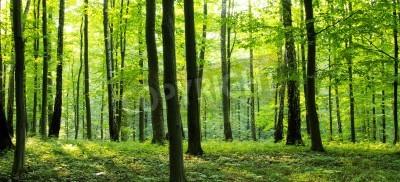 Fototapete Eine ländliche Straße durch einen Wald voller Bäume.