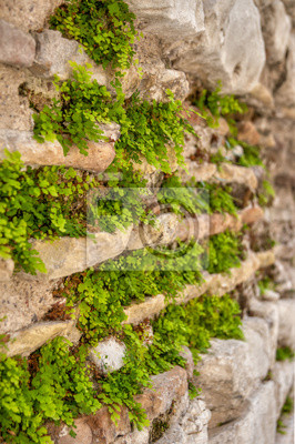 Eine mit moos und pflanzen bewachsene, granitene wand. fototapete ...