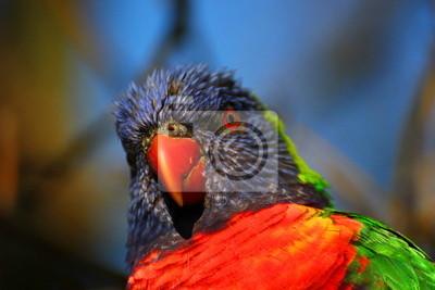 Eine Nahaufnahme von einem Regenbogen lorikeet