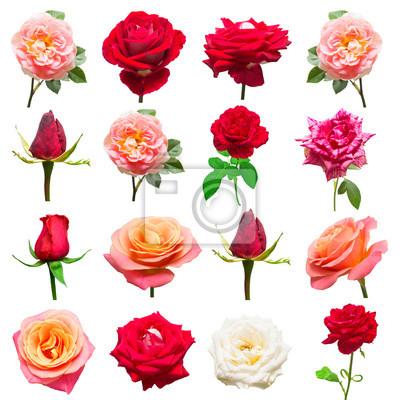 Eine schöne sammlung von rosen blumen in weiß, rot und rosa farben ...
