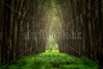 Fototapete Eingebildeter Baumtunnel. Schöne Naturwaldphantasie.