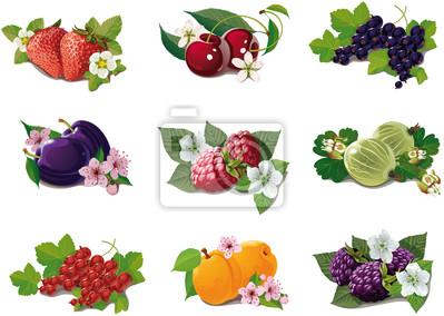 eingestellt von reifen Früchten