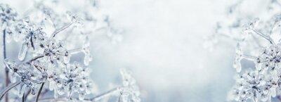Fototapete Einige gefrorene schöne Ase-Unkraut-Pflanzen mit Eiszapfen bedeckt. Winter Hintergrund. Freier Platz für Text. Geringe Tiefenschärfe. Flache Schärfentiefe. Getönten.