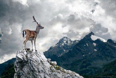Fototapete Einsame Deer