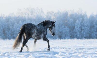 Fototapete Einsame Pferd geht auf dem Feld