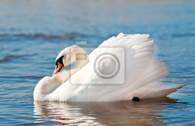 einsame Schwan ruht auf dem Wasser