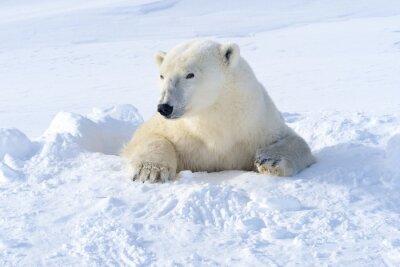 Fototapete Eisbär Mutter kommen aus frisch geöffneten den