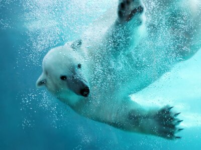 Fototapete Eisbär Unterwasser-Angriff