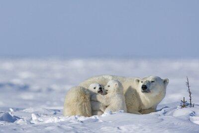 Fototapete Eisbärin mit Jungen