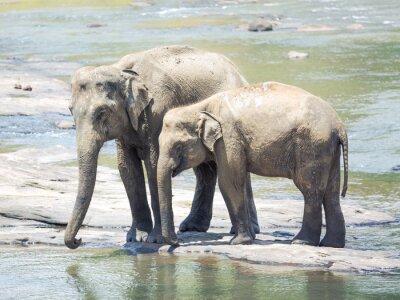 Fototapete Elefanten