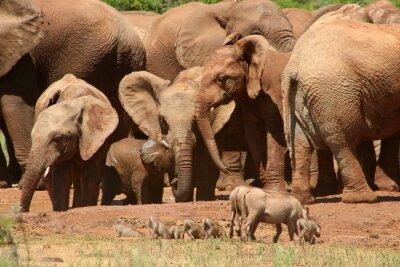 Fototapete Elefanten Add0 07