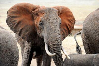 Fototapete Elefanten im Nationalpark von Kenia