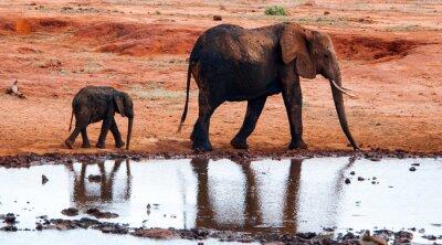 Fototapete Elefanten im Tsavo Ostnationalpark