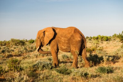 Fototapete Elefanten im Tsavo Ostnationalpark, Kenia