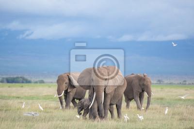 Fototapete Elefanten in Amboseli / Familie