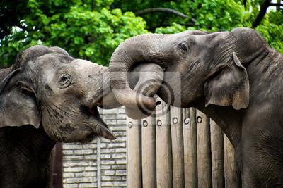 Elefanten Küssen