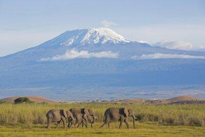 Fototapete Elefanten mit Kilimandscharo