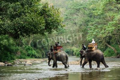 Fototapete Elefanten-Trekking durch Dschungel in Nord-Thailand
