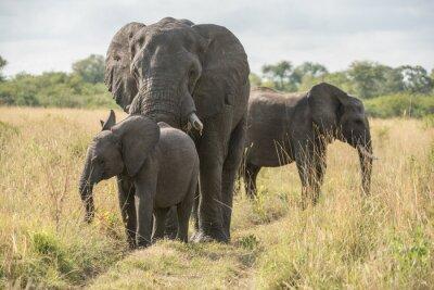 Fototapete Elefantenbulle mit Jungtier