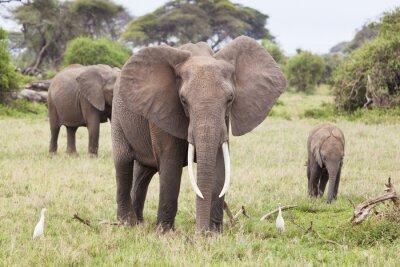 Fototapete Elefantenfamilie in Kenia