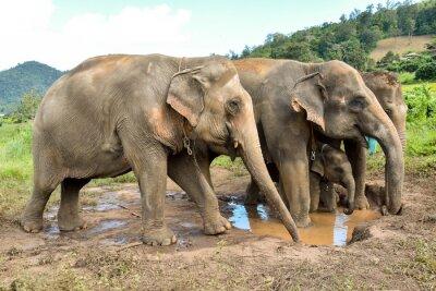 Fototapete Elefantenherde mit einem Babyelefanten an einem billabong