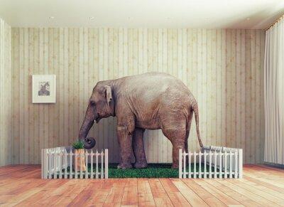Fototapete Elefantenkalb - Haustier