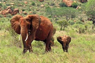 Fototapete Elephants