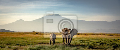 Fototapete elephants in front of kilimanjaro