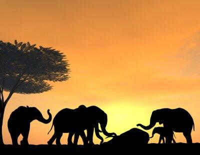 Fototapete Elephants Morn Their Dead at sunset, a very tender scene.