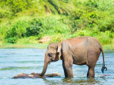 Fototapete Elephatnt