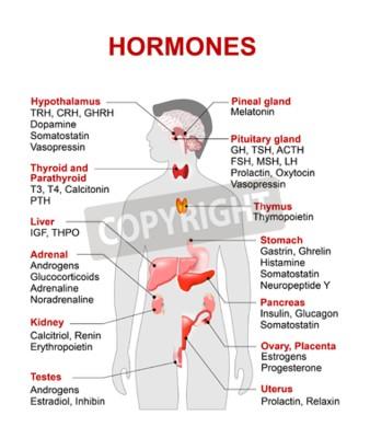 Endokrine drüse und hormone. menschliches endokrines system ...