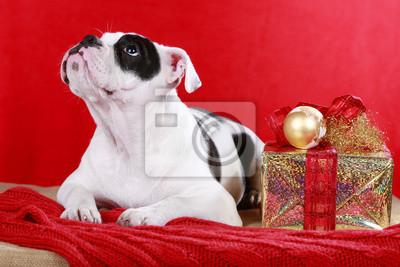 Weihnachtsdeko Hund.Fototapete Englische Bulldogge Hund In Weihnachtsdeko