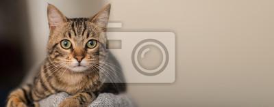 Fototapete Entspannte Hauskatze zu Hause, drinnen