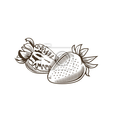 Erdbeere im Weinleseart. Linie Kunst Vektor-Illustration