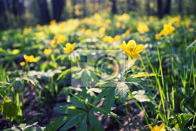 Erste Blumen Im Fruhling Fototapete Fototapeten Konzentrieren