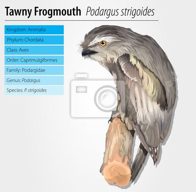 Eulenschwalm Owl