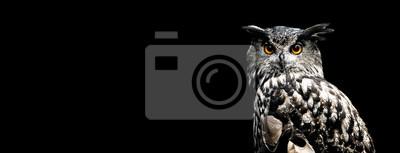 Fototapete Eurasian eagle owl with a black background