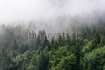 Fototapete Evergreen Forest Überblick - Tops von hohen grünen Bäumen mit dichtem Nebel, der über üppiger Wildnis rollt