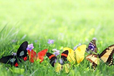 Fototapete Exotische Schmetterlinge Rahmung Green Grass Hintergrund