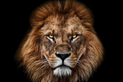 Fototapete Face Lion King